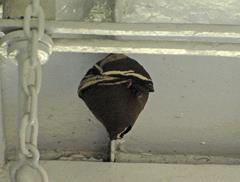 運転席にハチの巣が