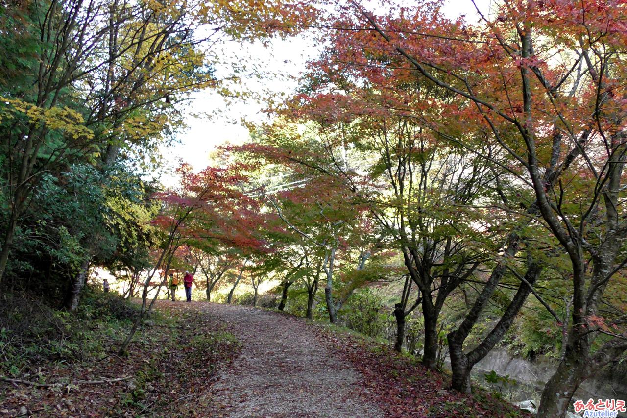 柿ヶ入沢散歩道