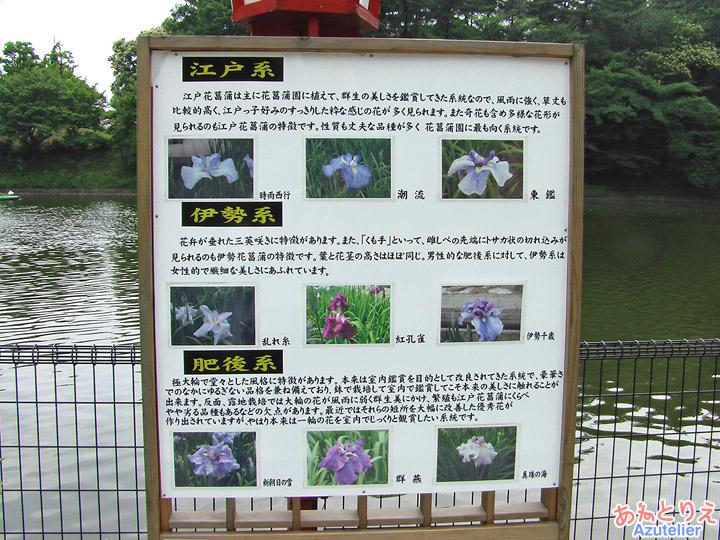 花菖蒲の種類