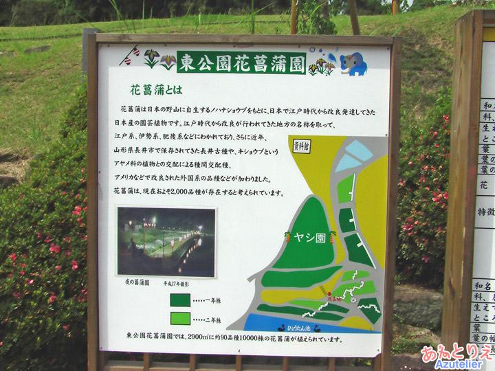 東公園花菖蒲園について