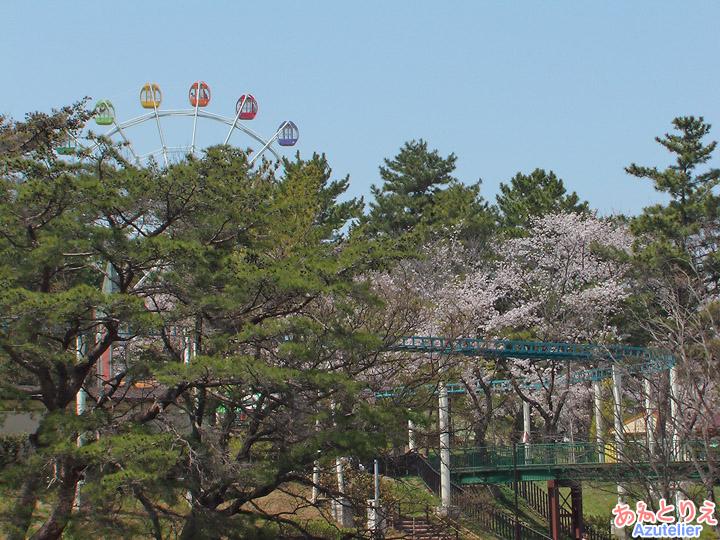 桜と遊園地