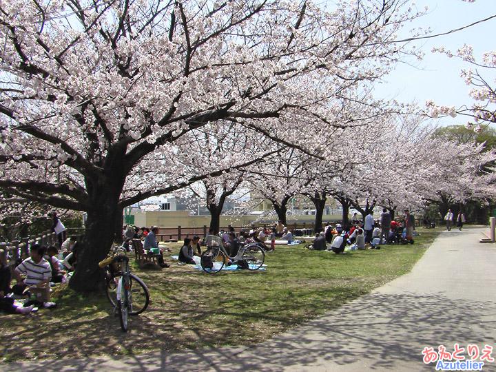 桜の下でお花見
