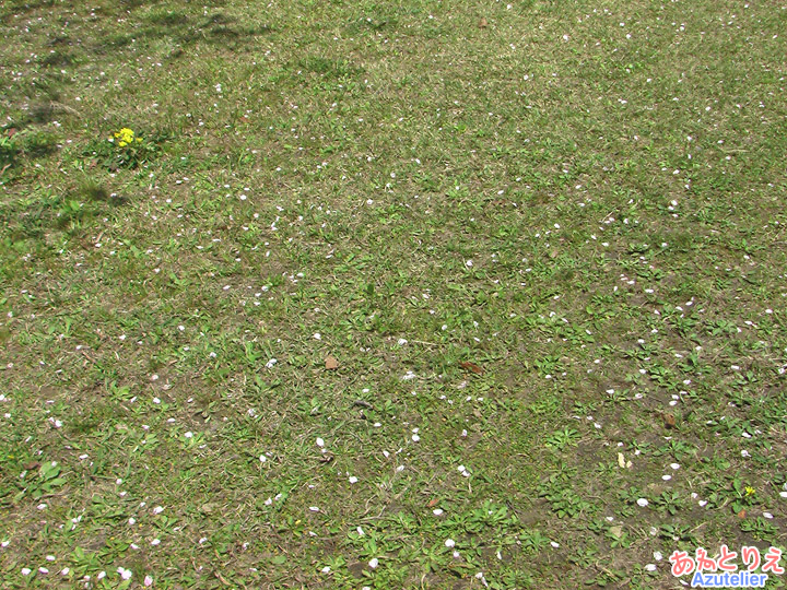 地面に降った花びら