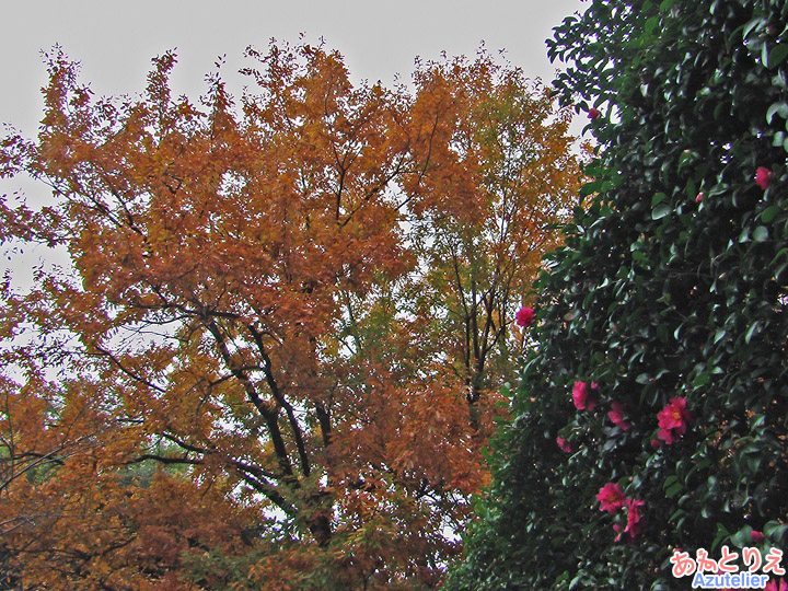 紅葉とツバキ