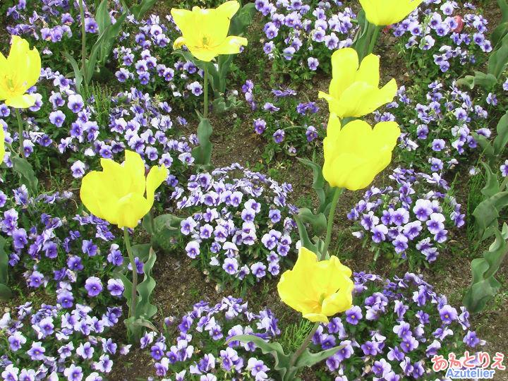 フラワーガーデン・春