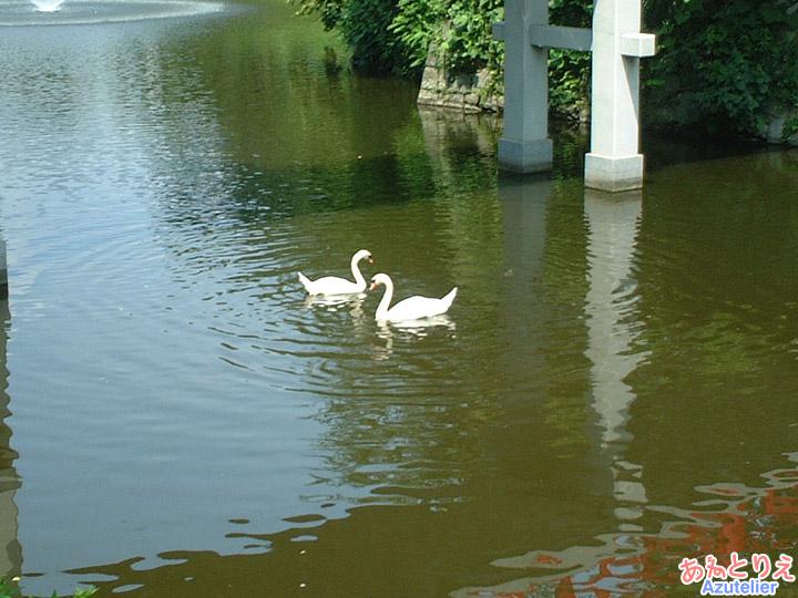 白鳥(龍城堀)