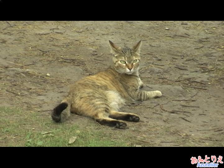 岳本公園、ネコ