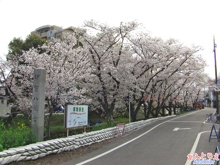 実際に桜子の走った道(『純情きらり』ロケ地)