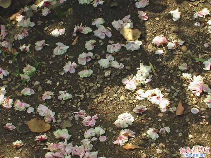 咲きおわり