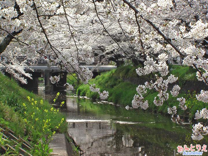 伊賀橋から上流