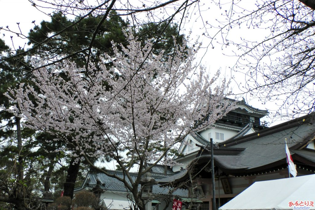 一番咲きよりも早い桜?