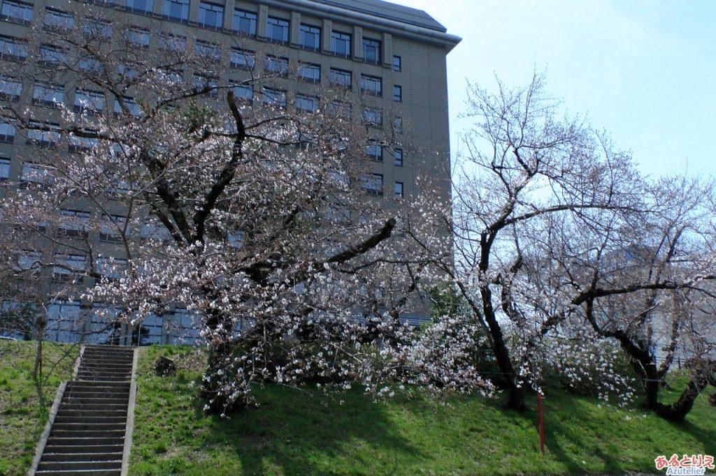 愛知県西三河総合庁舎前
