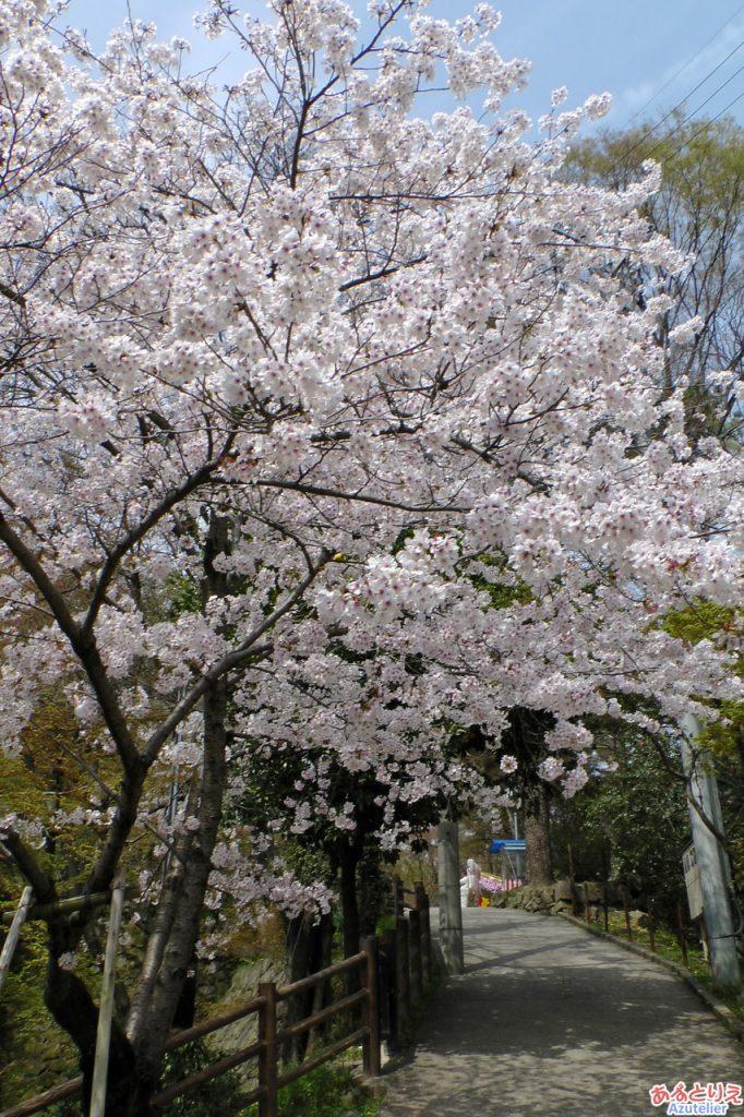 岡崎城へ続く坂