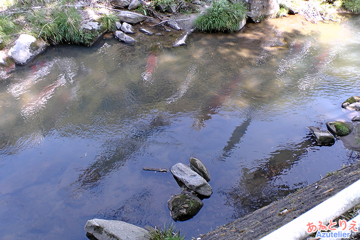 水に映る鯉のぼり