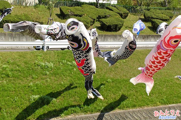 踊る鯉たち