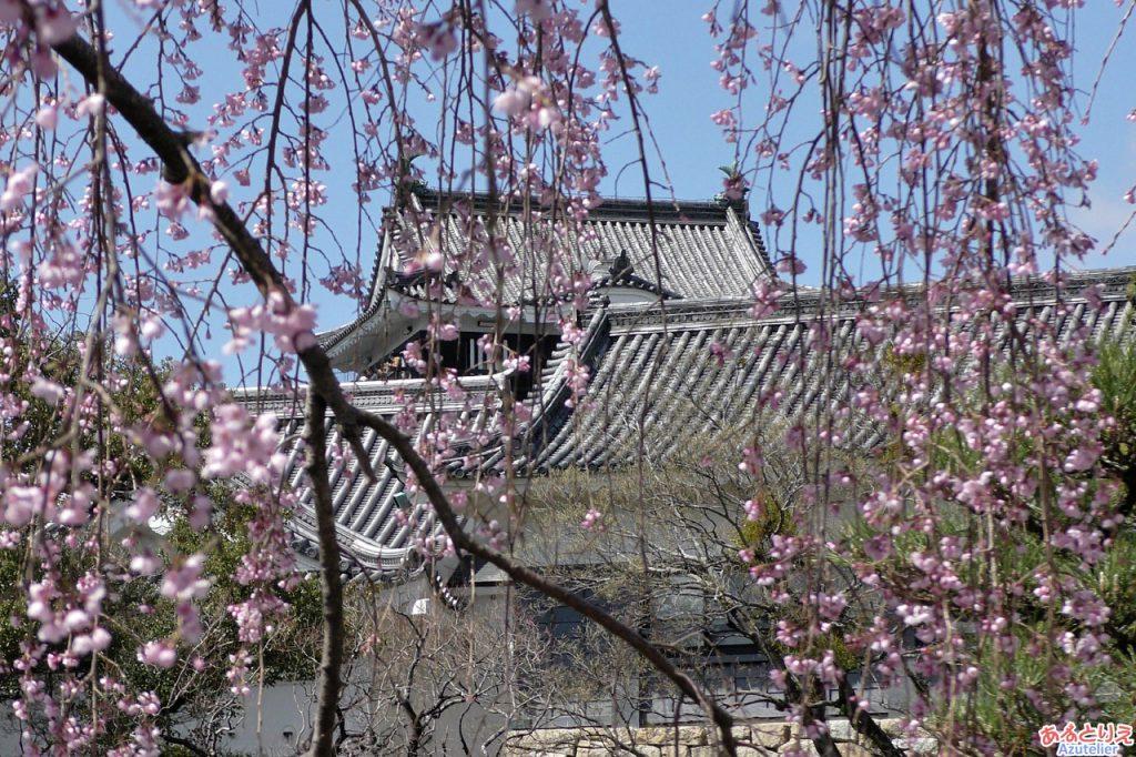 城南亭のしだれ桜