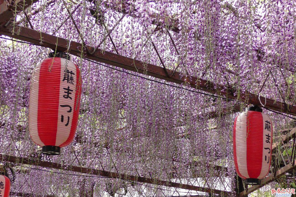 徳王神社の藤
