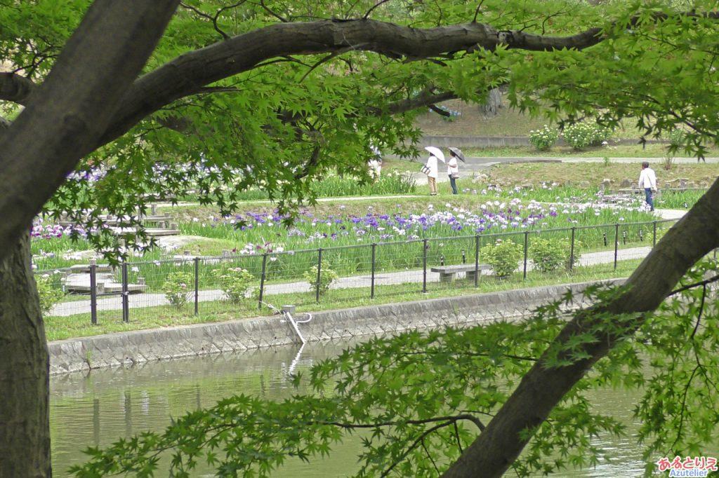 東公園菖蒲まつり(2019年6月4日)