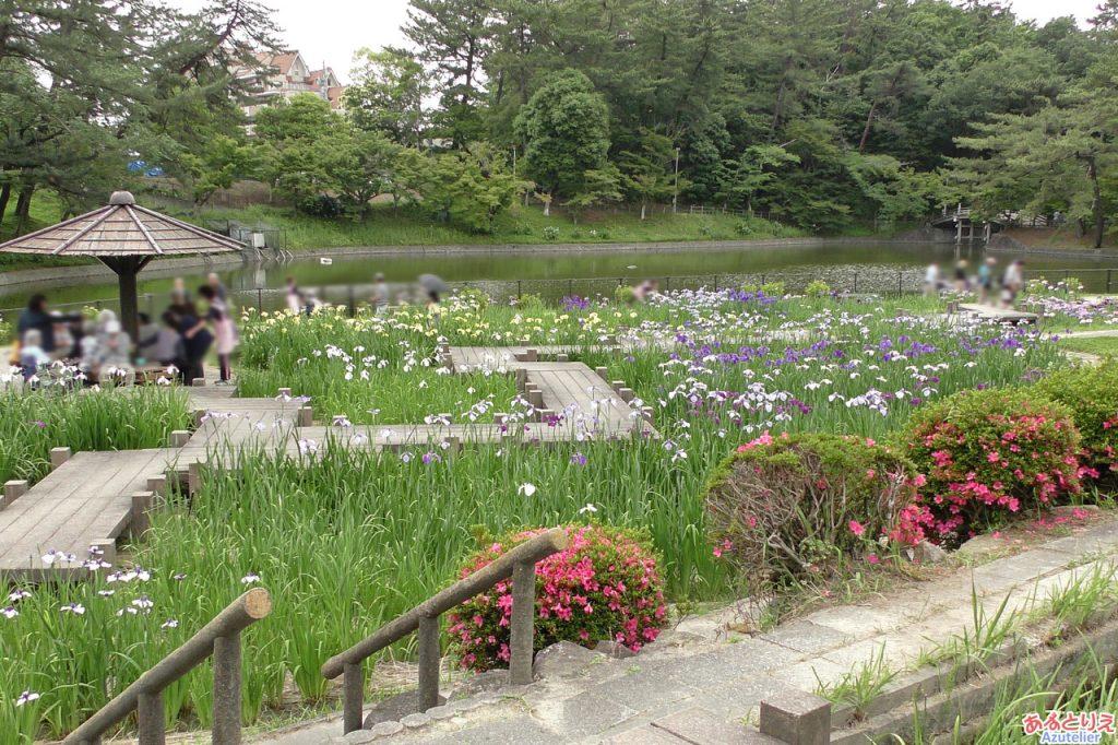 東公園花菖蒲まつり(2019年6月4日)