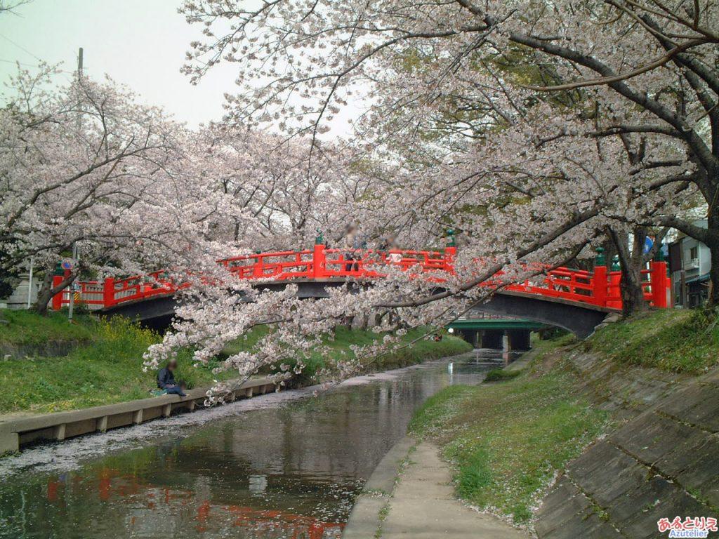 伊賀八幡宮:桜の時期の神橋