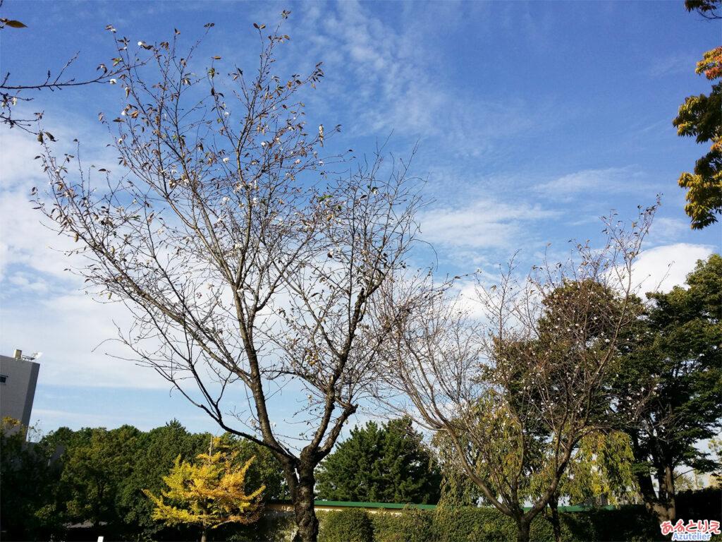 中京競馬場:なぜか桜が咲いていました