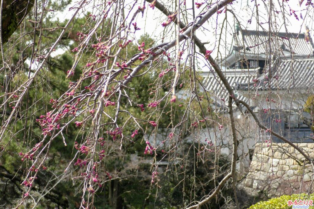 城南亭の桜は?
