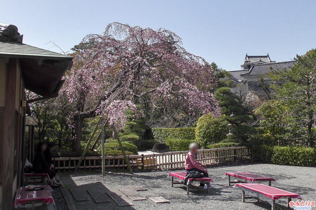 城南亭の庭