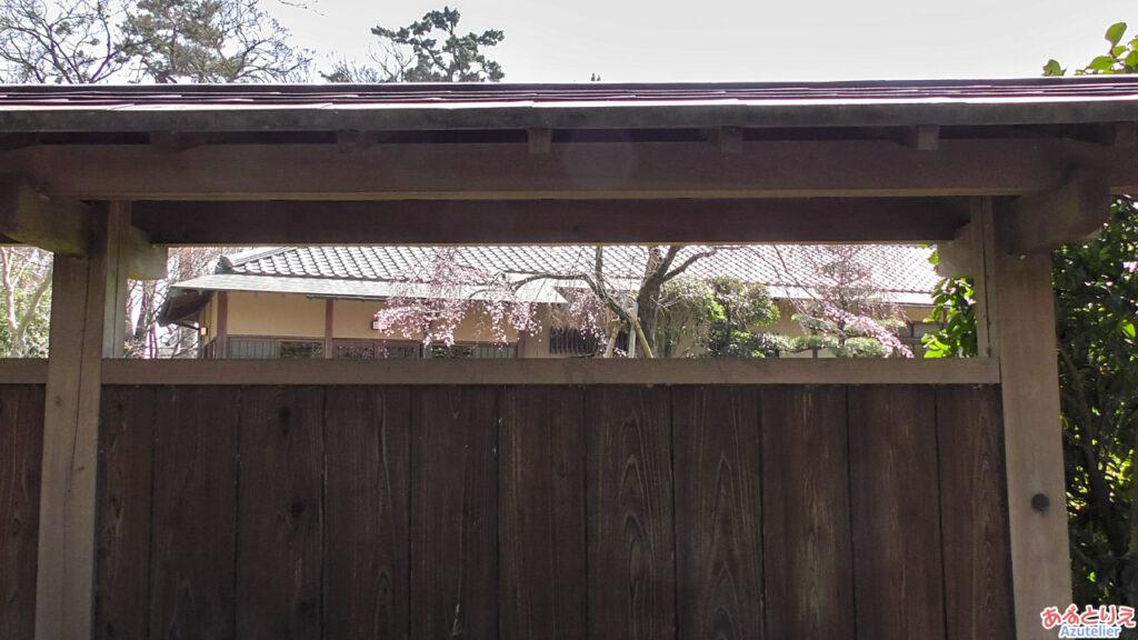 城南亭内の桜