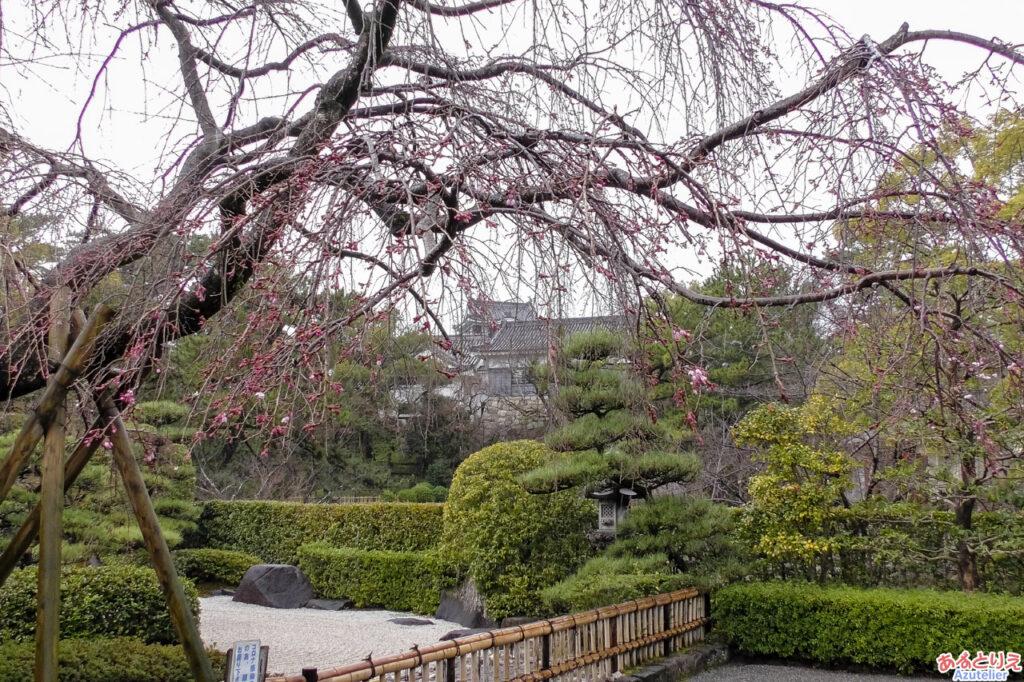 城南亭の桜ぽつぽつ(2021年3月13日)